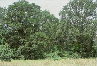 lrg_post_oak_parks_woods.jpg
