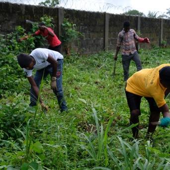 Members of the Dauda Town Branch clearing weeds